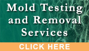 Mold Testing and Removal Services